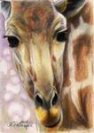 Giraffe for urbanwavemuffin