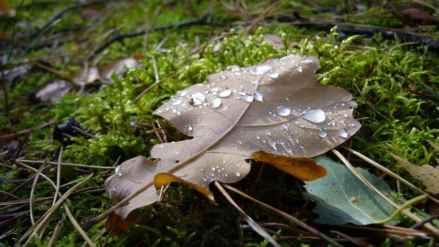 Raindrops by neressia