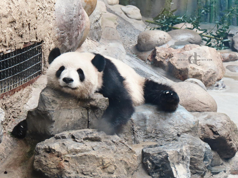 Lazy Panda by demeters on DeviantArt