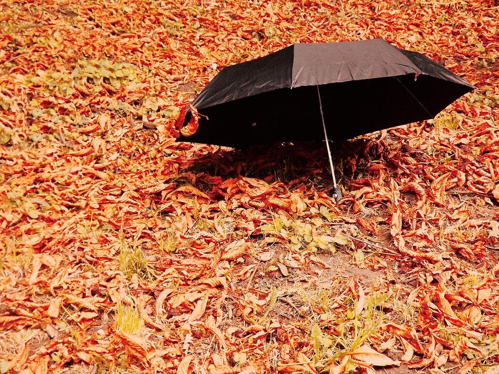 Kisobrani - Page 2 Umbrella_by_behindgreeney3s-d4e6vyo