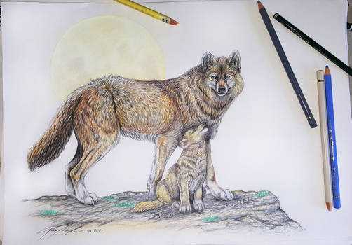 Wolves commission