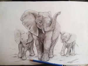 Elephant commission