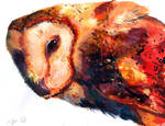 Ran afoul of an owl...