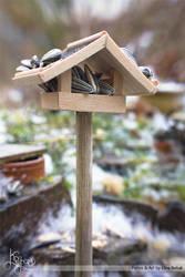 Hey birds... by Kospero