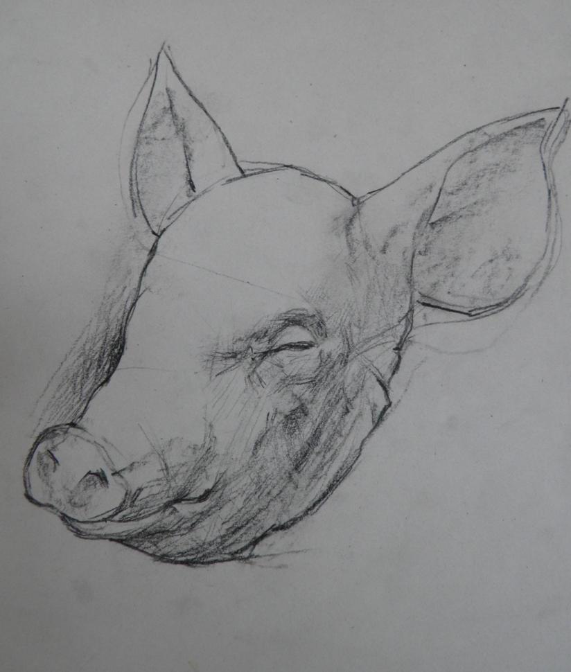 Pork Head Drawing Pig Head Drawing