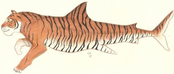Tiger Shark by angelfish1021