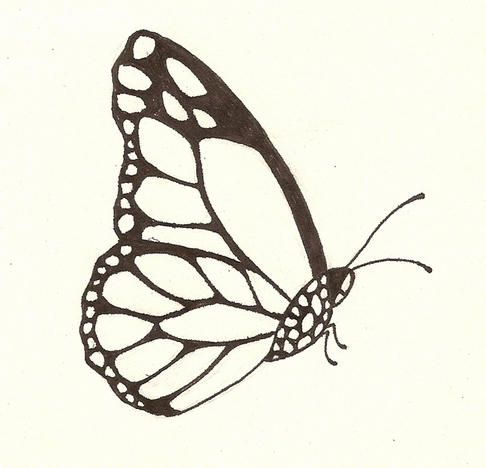 Butterfly Side View Drawing - 86.2KB