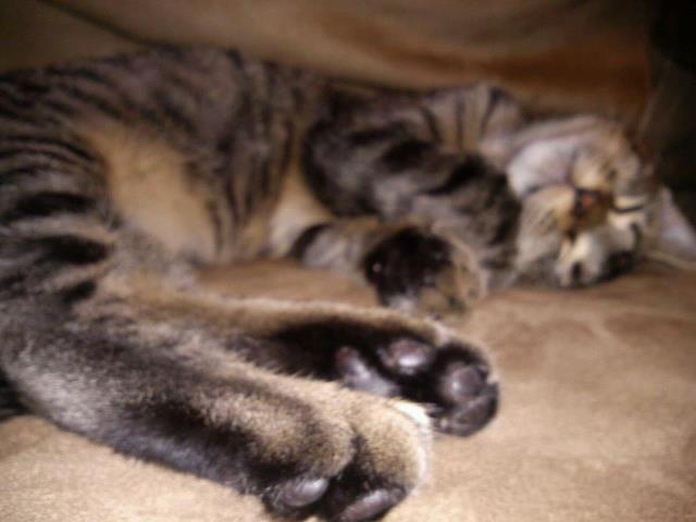 Soft kitty warm kitty lil ball of fur by disturbed66