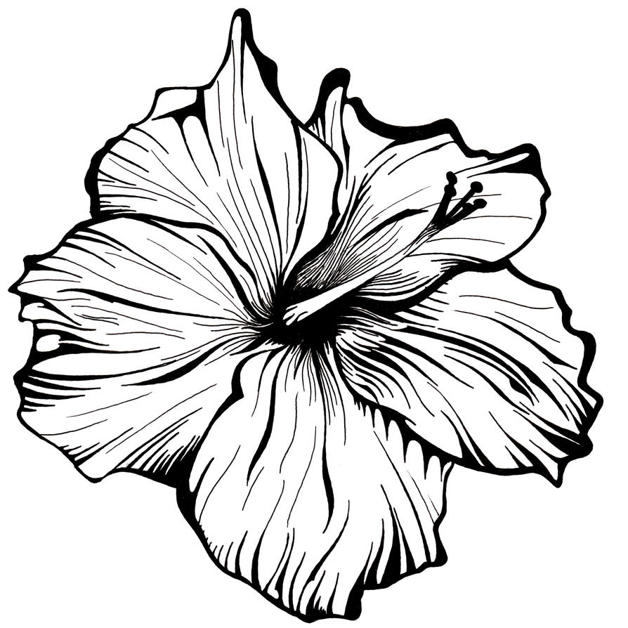 Line Drawing Sketches : White flower by robcrichton on deviantart