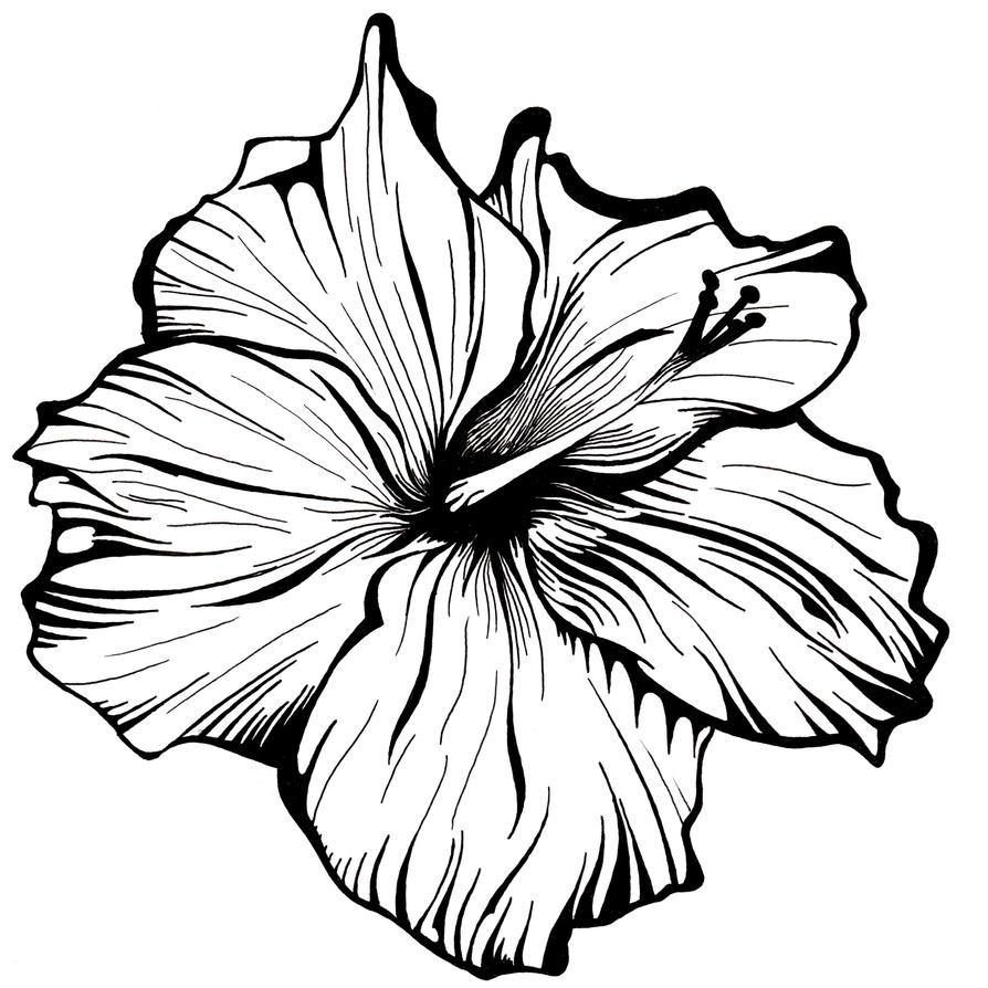 Flower drawings xeoe flower drawings izmirmasajfo