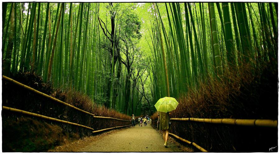 Bamboo Trail At Tenryu Ji By Bin1302 On Deviantart