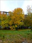 Autumn [1]