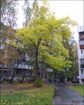 Autumn [2]