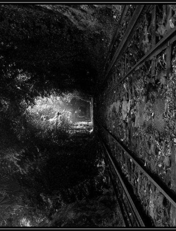Deep Forest Railway