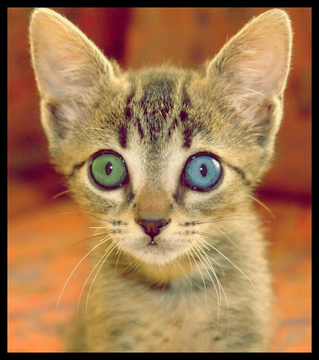 Heterochromia by TimmyDell