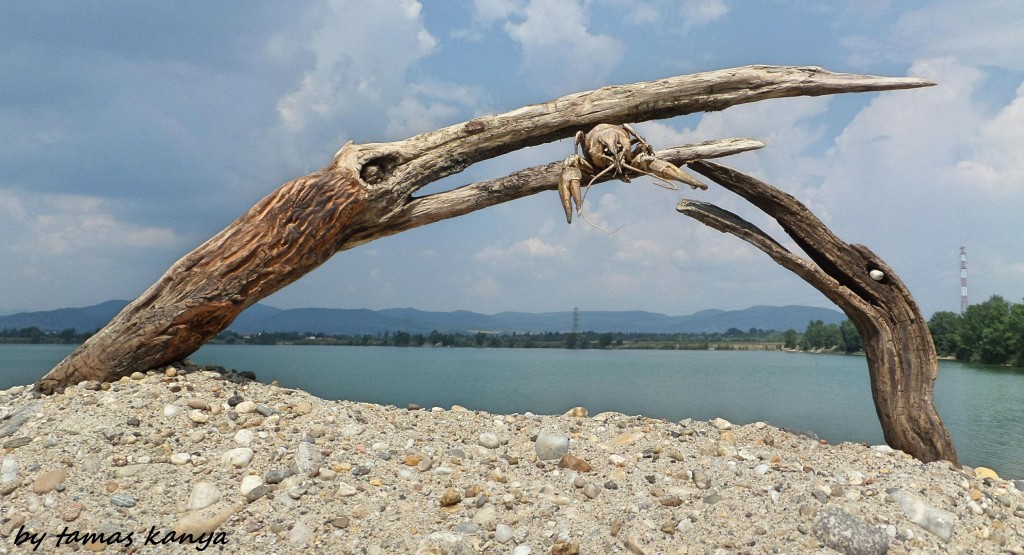 Driftwood art from Hungary by tamas kanya by tom-tom1969