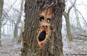 Land art-tree face by tamas kanya