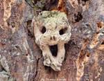 Tree face from Hungary by tamas kanya