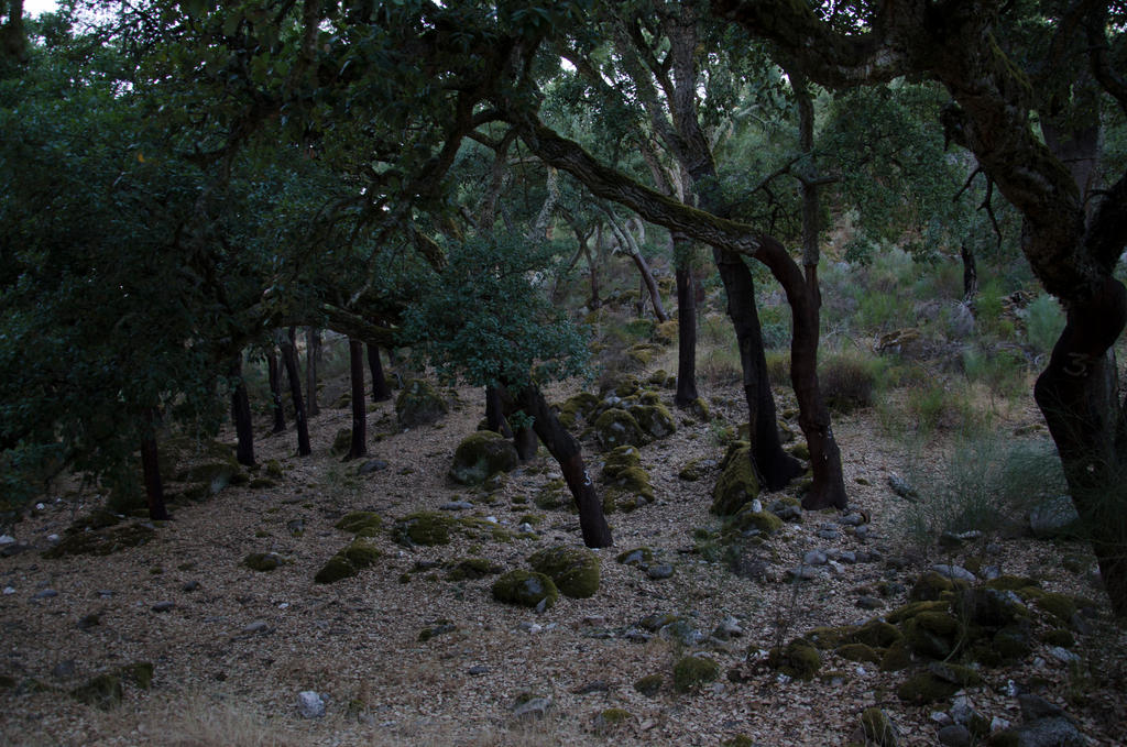 Forest-Stock II by Mocris
