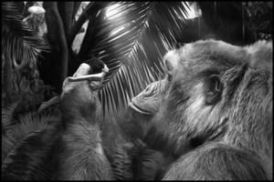 King Kong by Mocris