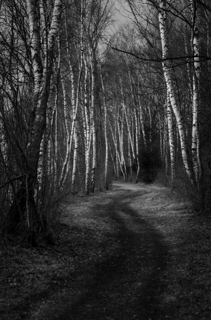 The Path by Mocris