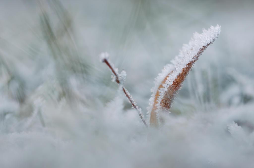 Winter Dream by Mocris