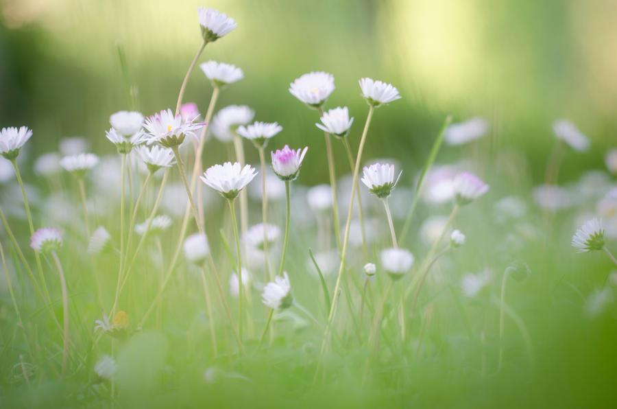Flower Dance by Mocris