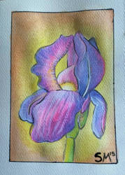Watercolour iris by stephtastic14