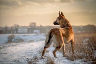 Winter Landscape by Nefflin