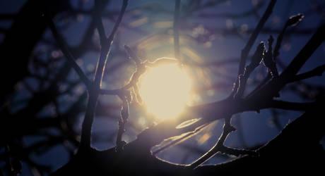 Dark Winter by StilllHeartLife