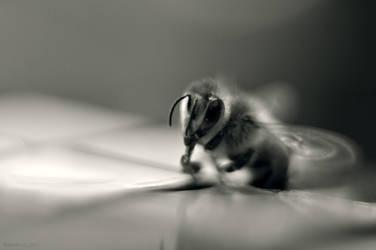 Rubik's bee by r-f