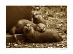 Otter Trio by amazoncat