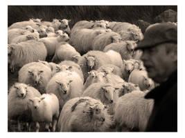 Shepherd and flock by amazoncat
