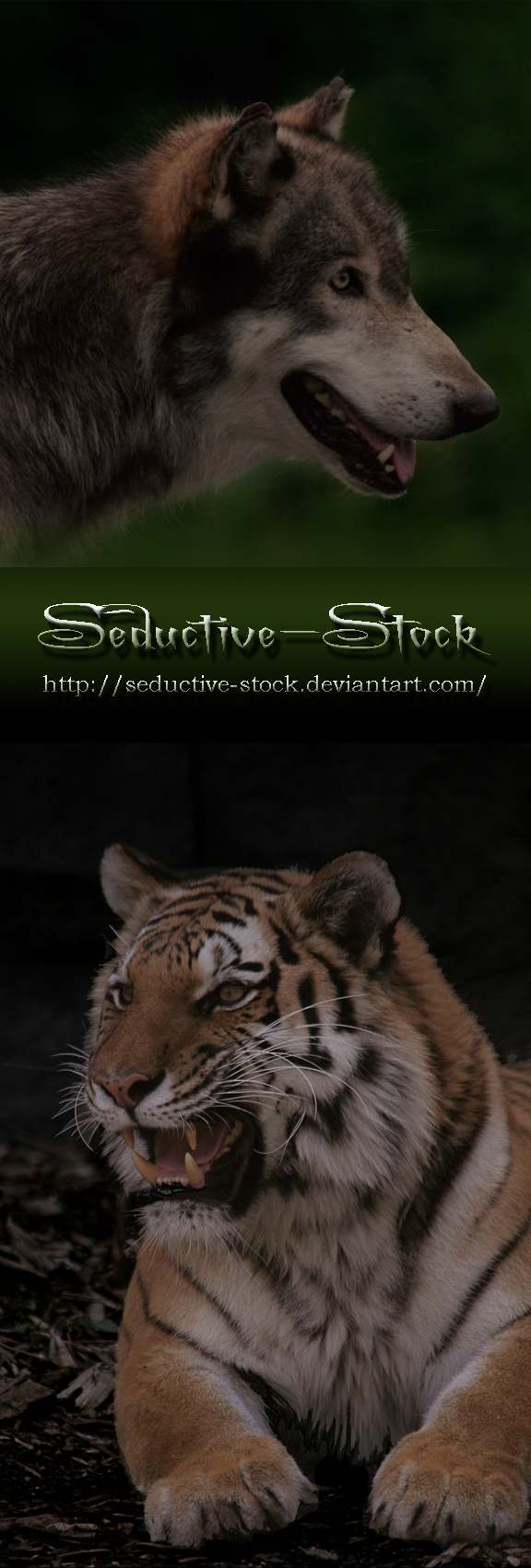 Seductive-Stock's Profile Picture