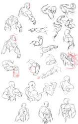 Muscle studies