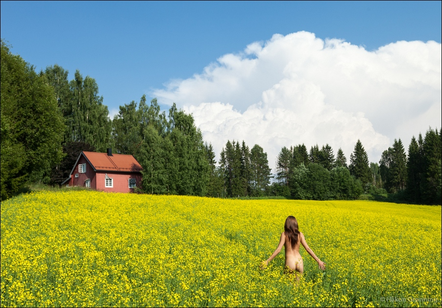 Summer in the canola meadow by lightandshape
