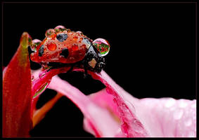 Water drops by dtr777