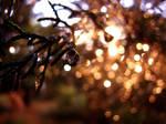 glittering dewdrops.