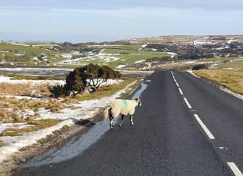 Wooly Crossing