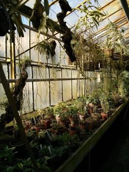 moldy greenhouse
