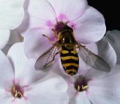 Pollen Sucker by master-voldemort