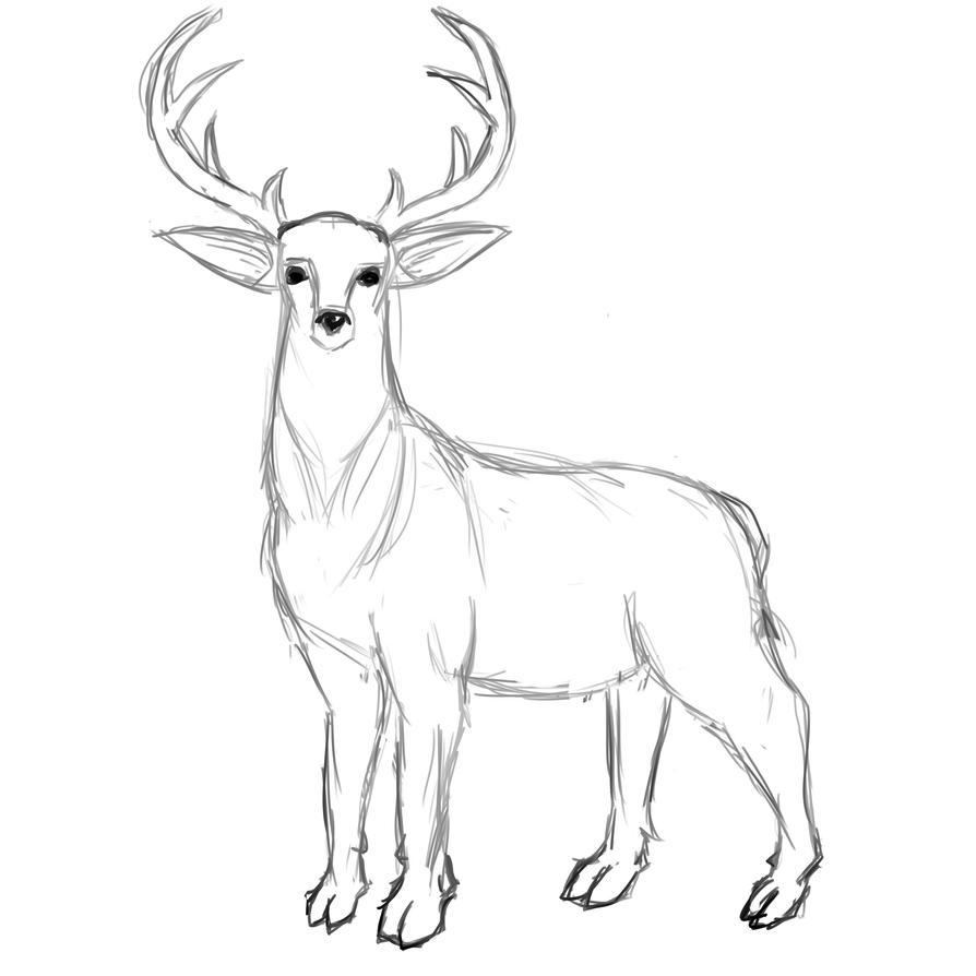 deer sketch by ilartist on deviantart