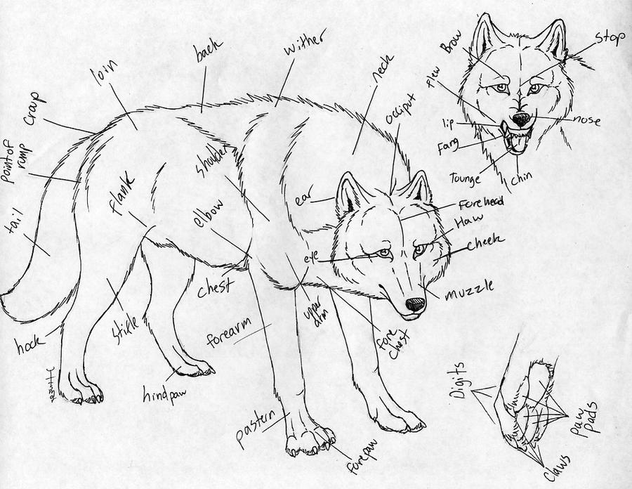 White Wolf Diagram Residential Electrical Symbols