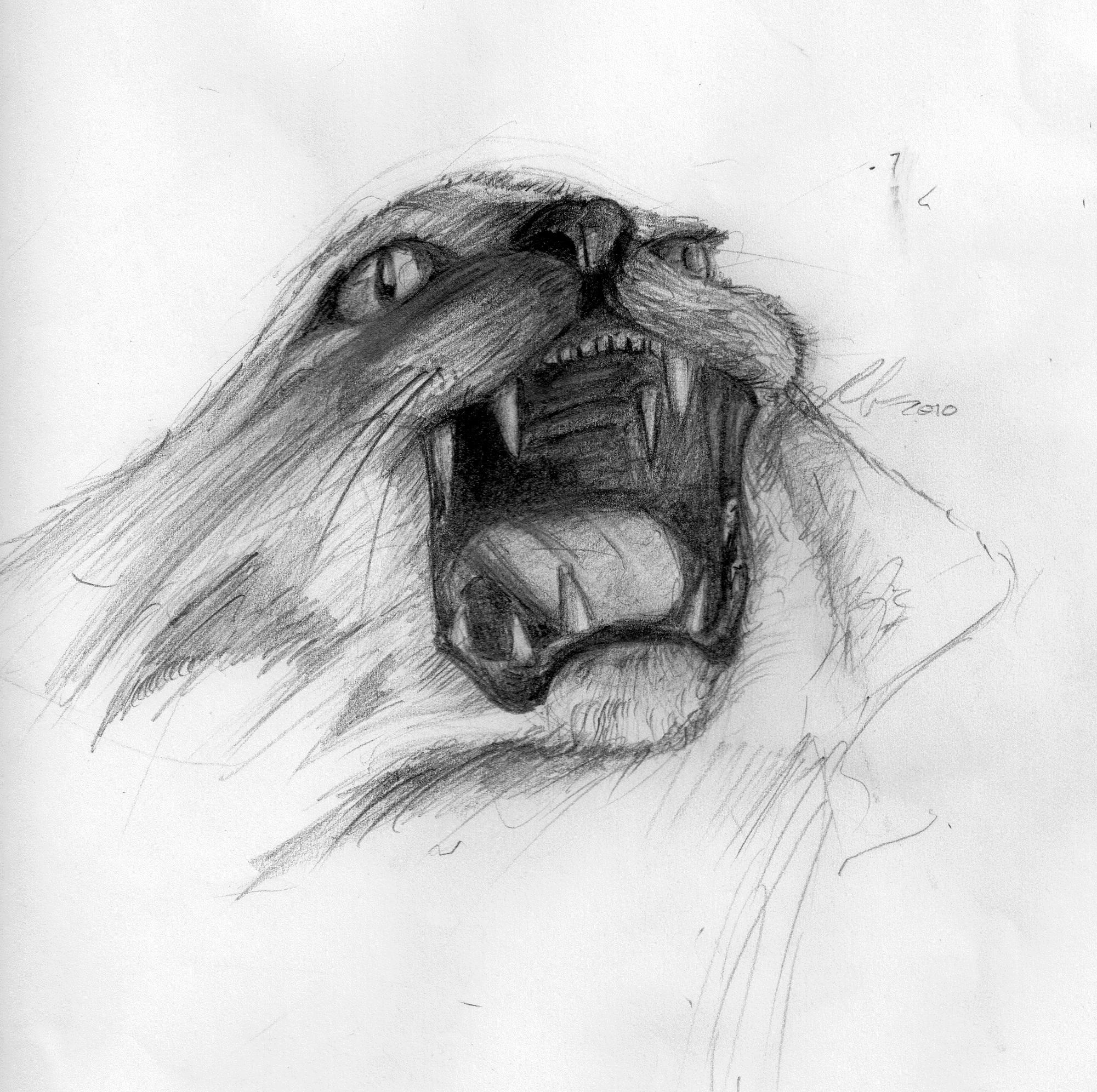 angry animal drawing - photo #24