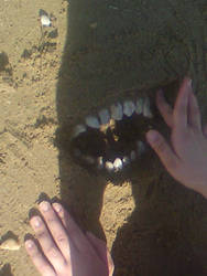 Smile in the Sand