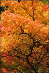Seattle Autumn -02-