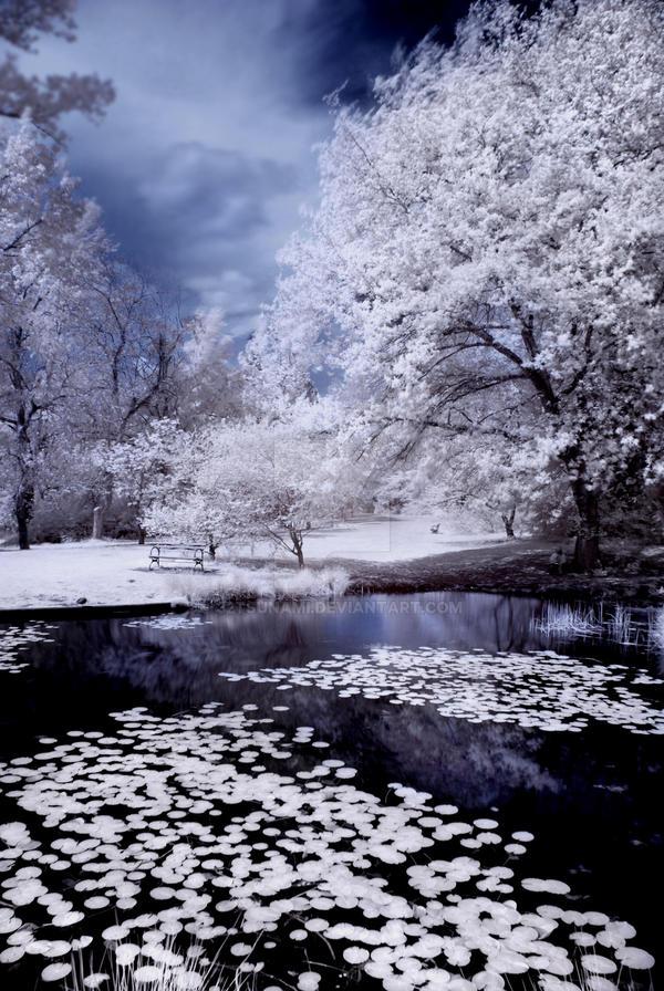 Arboretum Pond -redux- by 32tsunami