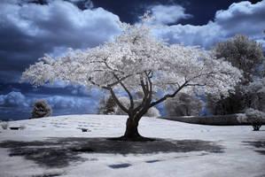 Cemetery Tree Three by 32tsunami