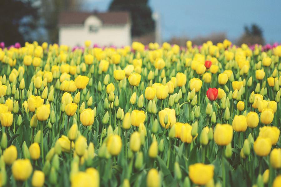 springtime-01- by 32tsunami