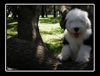 Henry - In a tree by pesky0yuna